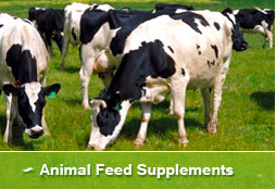 Animal Feed Supplements
